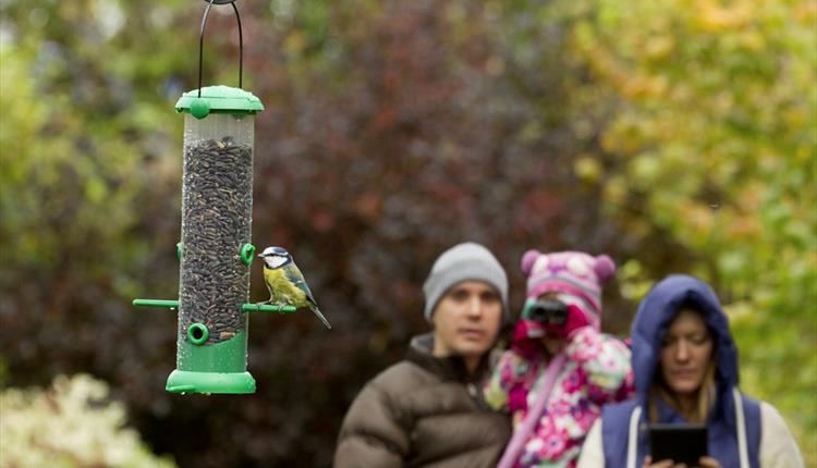The Big Garden Birdwatch Family Fun!