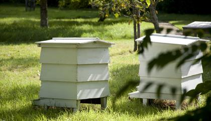 Bee hive building demonstration